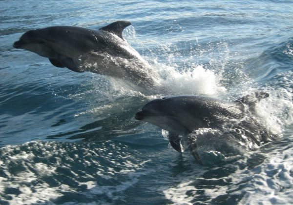Dolphins playing in Milford Sound